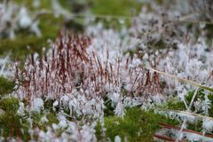 Gentle green fluffy moss with white snowflakes covers concrete slabs stock photos
