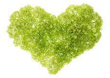 Gentle green heart Royalty Free Stock Image