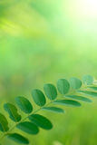 Gentle green leaves Royalty Free Stock Photography