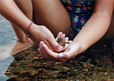 Gentle Hands. Young child gently holds tiny frog Stock Image