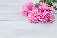 Gentle light pink flowers of chrysanthemums on a white wooden ba royalty free stock photography