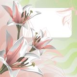 Gentle lily and greeting card Stock Photo