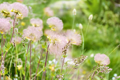Gentle mountain flowers background royalty free stock photos