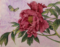 Gentle peony and butterfly Stock Image