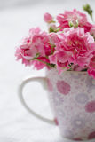 Gentle pink flower in pink cup. Stock Photos