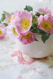 Gentle pink flower in pink cup Stock Photos