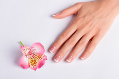 Gentle pink freesia with franch manicure. Gentle pink freesia with franch manicure on a white background royalty free stock photo