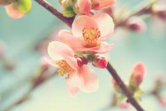 Pink petal macro Stock Images