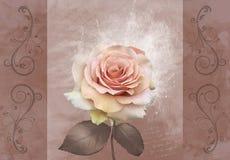 Gentle pink rose flower. Grunge old paper background with gentle pink rose flower Royalty Free Stock Photos