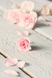 Gentle pink rose on wooden table. Shallow depth of field Stock Photo