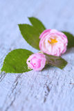Gentle pink rose on wooden table. Shallow depth of field Stock Photography