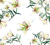 Gentle refined seamless pattern of white beige powdery lilies watercolor Royalty Free Stock Photos