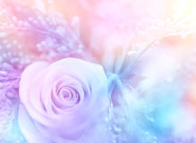 Gentle rose background Royalty Free Stock Image