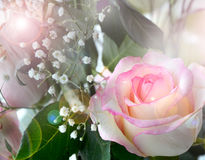 Gentle roses and gypsophilas Stock Photos