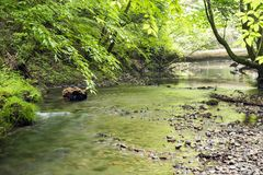 Gentle shallow brook. Flowing in fresh green forest Stock Image