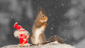 Gentle the snow Royalty Free Stock Photo