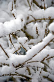 Gentle snow storm. With accumulation on small branches stock photos