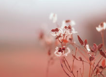 Gentle and soft sunset background with dry grass Royalty Free Stock Images