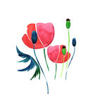 Gentle sophisticated gorgeous spring pattern of red poppies and buds with green leaves watercolor. Hand illustration Stock Photos