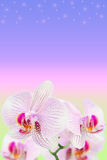 Gentle spotted orchids on blurred gradient Stock Photography