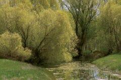 gentle spring Στοκ εικόνα με δικαίωμα ελεύθερης χρήσης