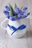 Gentle spring bouquet of blue muscari flowers in a jug Royalty Free Stock Photo