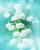 Gentle spring floral background. Royalty Free Stock Photo