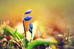 Gentle spring flowers Stock Photos