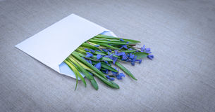 Gentle spring greeting card. Blue wildflowers Stock Photography
