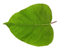 Gentle spring isolated leaf Stock Photo