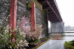 Gentle spring in rainy Portland Royalty Free Stock Photos