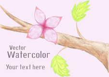 Gentle watercolor flower on branch Royalty Free Stock Photo