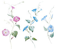 Gentle watercolor flowers Stock Image