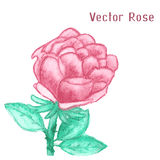 Gentle watercolor rose Royalty Free Stock Images