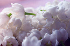 Gentle white spring flowers Stock Image