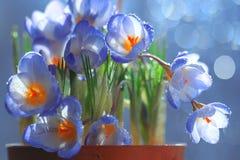 Gentle wild spring flowers Stock Photo