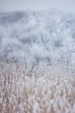 Gentle winter snow background Royalty Free Stock Photography