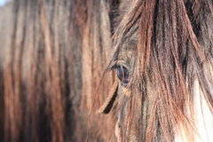 The gentleness of horses Royalty Free Stock Photography