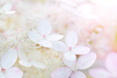 Gently flowers Royalty Free Stock Image