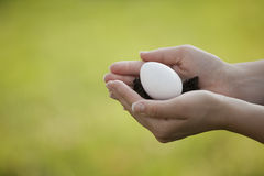 Gently Holding an Egg Stock Photography