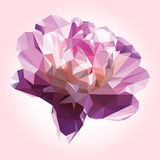 Gently pink flower. Large beautiful low poly bud peony. Gently pink flower. Beautiful low poly peony Stock Photos