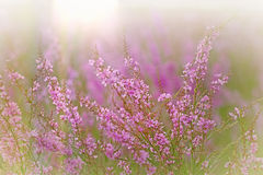 Gently purple flower Stock Photo
