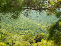 Gently sloping mountain, covered by forest Stock Photos