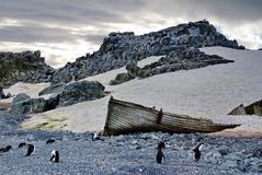 Gentoo一个海滩的企鹅殖民地与一条小船在南极洲 库存照片