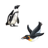 Gentoo企鹅 在白色查出的例证 库存图片