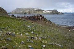 Gentoo在绿藻类包括的企鹅殖民地用另一海岛、海洋和天空在背景,艾秋群岛,南舍德兰群岛Isl中 库存图片