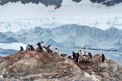 Gentoo小山的企鹅殖民地,在冰川前面 库存照片
