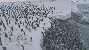 Gentoo penguin colony going ashore aerial top view. Antarctica Bird Group Walk on Dangerous Snow Covered Ocean Coast Landscape. Arctic Extreme Shallow Top stock video footage