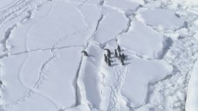 Gentoo penguin jump antarctic land aerial view stock video footage
