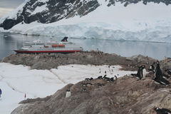 Gentoo penguin rookery with cruise ship Royalty Free Stock Images